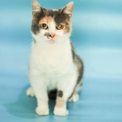Красавица Тесса ищет дом котенок котята кошеня кот кошка котеня кошеня