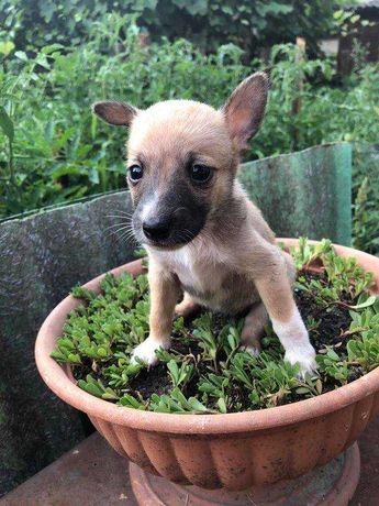 Крохотные щенки приюта Счастливый Пёс ждут мамупапу