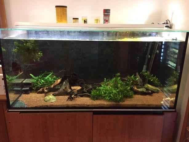 Aquario 120x50x60