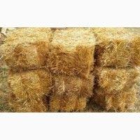 Продам солому пшеничну и ячную в тюках