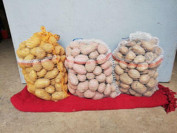 Ziemniaki Irga, Ricarda, Lord