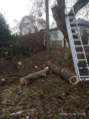 Обрізка дерев, покос трави, чистка території по Львову та обл.