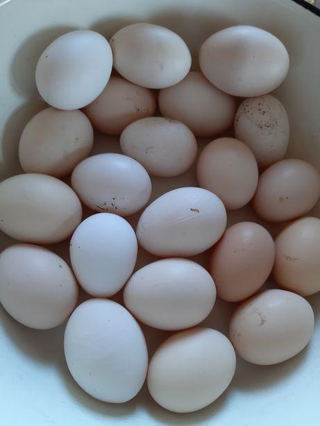 Jaja jajka wiejskie