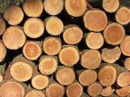 Продам дрова дуб,ясень, береза, ольха.Доставка БЕСПЛАТНАЯ!