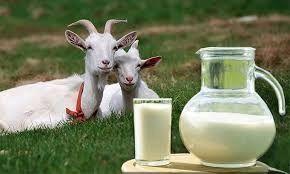 Продаємо козине молочко