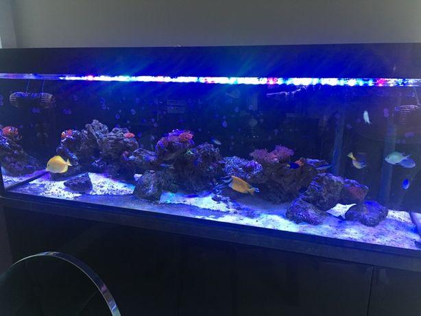 Akwarium morskie 150x50x50