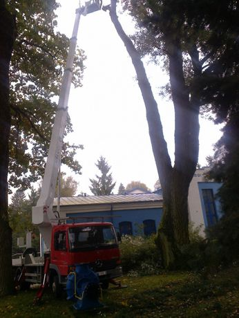 wycinka drzew samoiej krzaków