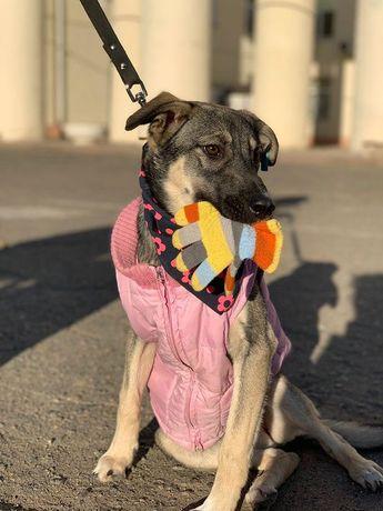 Стерилизованная собака, 7 мес ищет дом