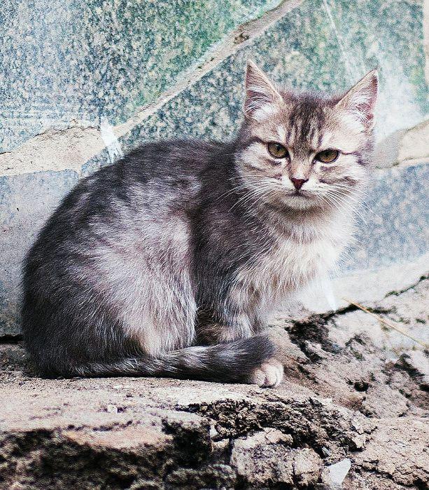 Красивый , как на картинке, Вискасный котенок в добрые руки Киев - изображение 1