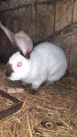 Кролик кроль мальчик, девочка