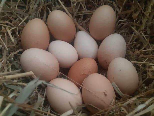 Ovos de galinha caseiros (2€) a dúzia