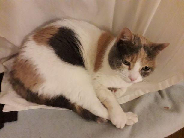 Zaginęła kotka tricolor bezprawnie oddana do Fundacji Azylu Koci Świat