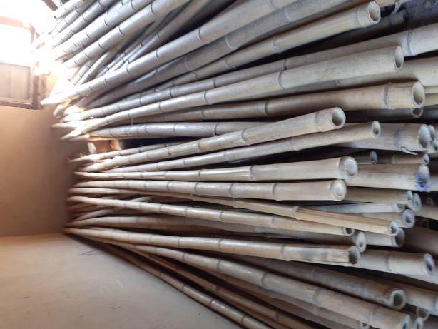 Бамбук,ствол , 3 м.