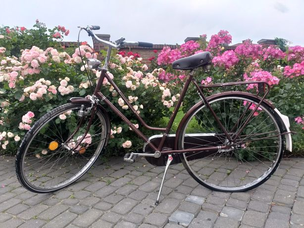 Gazelle rower damka holenderska