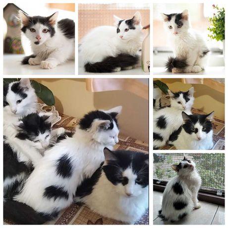 Монохромные пятнистые котята в добрые руки, 4 мес, котенок кошка