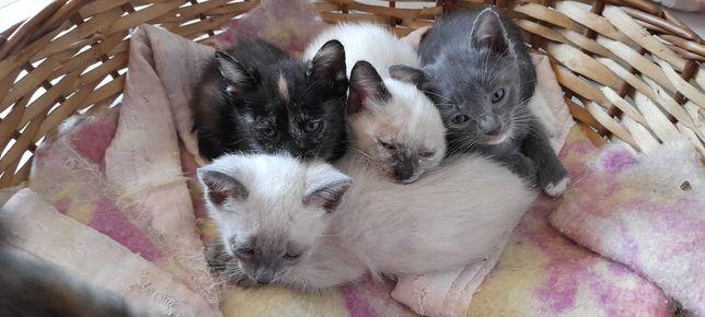 Dou Gatinhos bebés