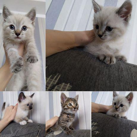 Отдадим в хорошие руки котят