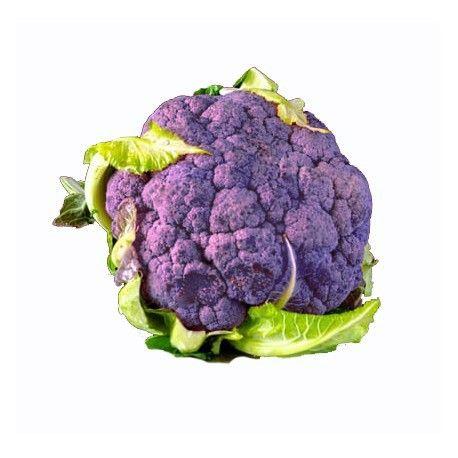Sementes de Couve Flor Violeta Catanese