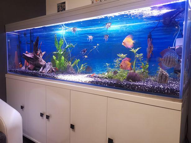 Akwarium 600 L z życiem i wyposażeniem