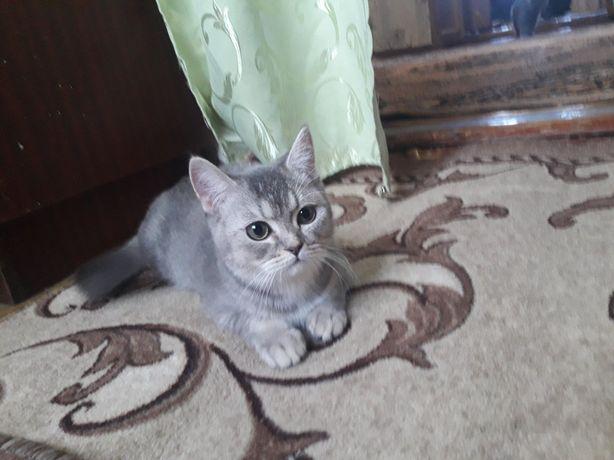 Котёночек для семьи