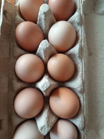 Jajka wiejskie na sprzedaż