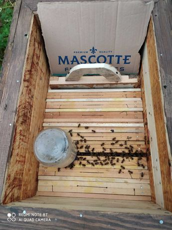 Domki z pszczołami