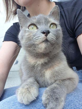 Киця, кішка, кіт, кошеня, стерилізована, у найкращі руки