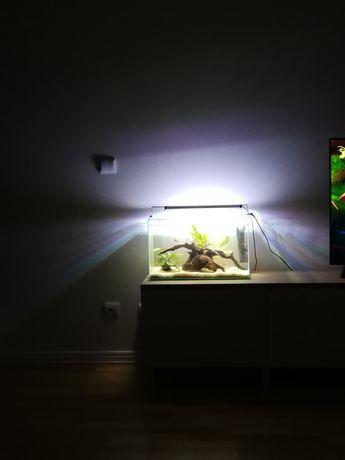 Aquário e peixes água fria completo 40lt