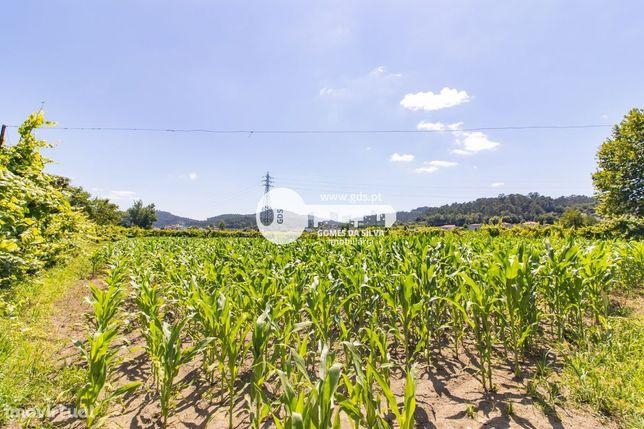 Terreno com 6043m2 p/ agricultura em Trandeiras