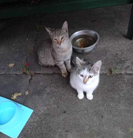 Dwa urocze kocięta do oddania w troskliwe ręce!