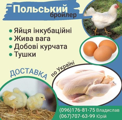 Курчата Бройлера домашні яйця домашня тушонка