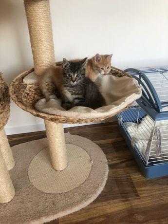 Kotki szukają domu .