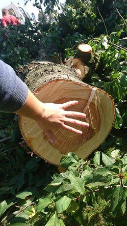 Drzewo czereśnia 45 letnia, zdrowe, na meble, na opał