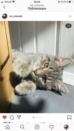 Котенку нужен дом!Помогите!