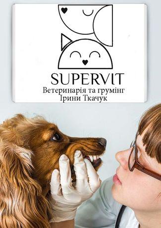Стоматология для собак. Ультразвуковая чистка зубов собак и котов