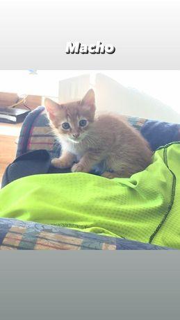 Doação de gatos fofinhos
