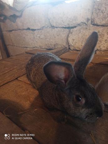 Продам кроликів різних порід