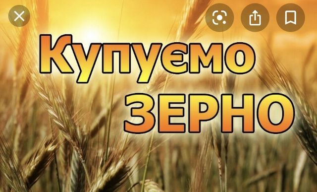 Пшениця,ячмінь