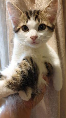 Отдам котеночка в добрые руки