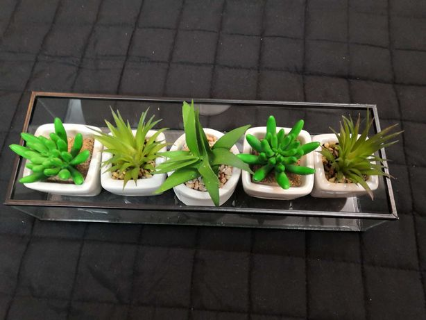 Taca szklana plus rośliny