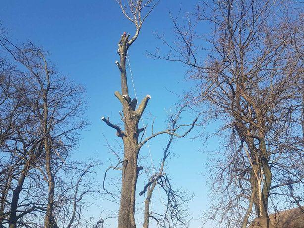 Wycinka drzew trudnych,usługi rebakiem,uslugi mulczerem pod budowe