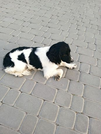Найдена, замечена собака село Пирогова Академичная