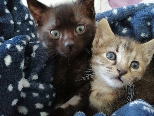 Dou gatinhos na zona de Mafra