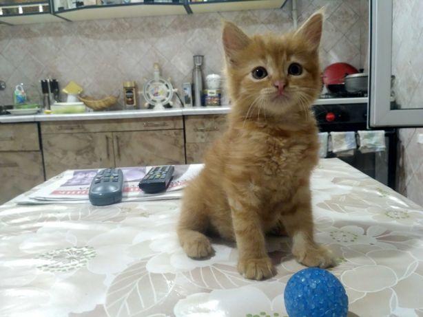 Отдам в хорошие руки котёнка!!!