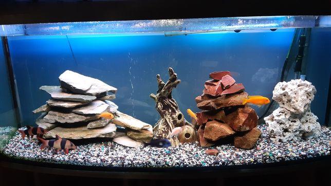 Kompletnie wyposażone akwarium panoramiczne 450 l.