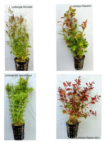 Plantas para aquário - despachar