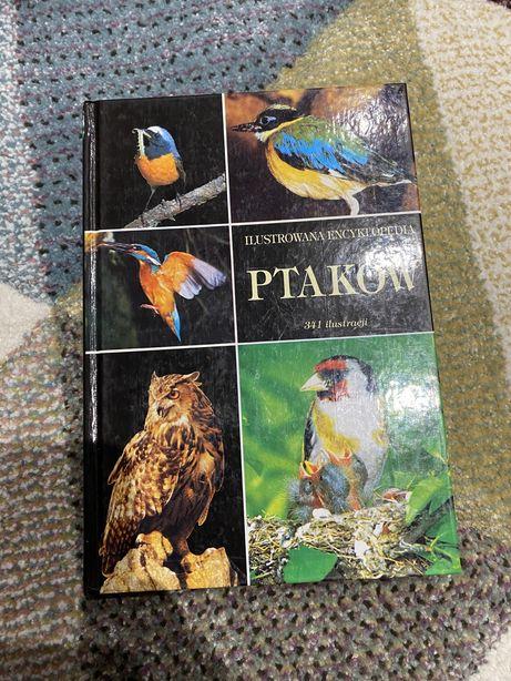 Ilustrowana encyklopedia ptakow 341 ksiazka poradnik