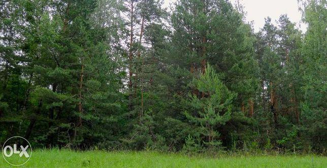 Дымер, 6 га, ОСГ, возле леса
