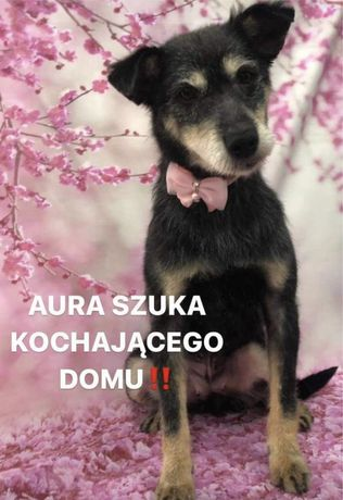 Aura szuka domu!