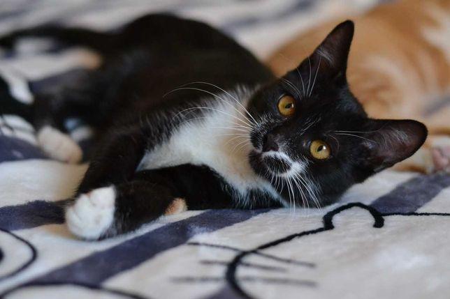чорно-білий юний котичок 4м